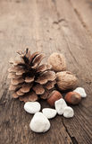 Fir cone next to various nuts Stock Photography