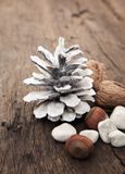 Fir cone next to various nuts Royalty Free Stock Photo