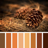 Fir cone palette Stock Photography