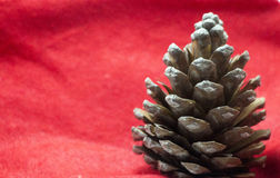 Fir cone on red Stock Photography