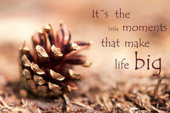 Fir Cone with Saying Its the little Moments that make Life Big Stock Photography