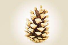 Fir cone Stock Photo