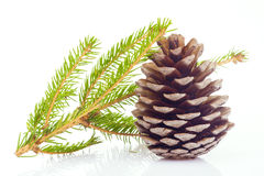 Fir cone and spruce branch Royalty Free Stock Photos