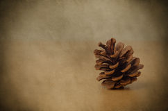 Fir Cone - Vintage Style Royalty Free Stock Photo