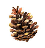 Fir cone watercolor. Watercolor image of fir cone on white background Stock Photo