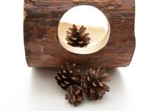 Fir cone with wood Stock Photo