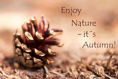 Fir Cone with the Words Enjoy Nature, its Autumn Royalty Free Stock Photography