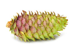 Fir cone Stock Image