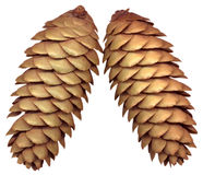 Fir cones Stock Photos