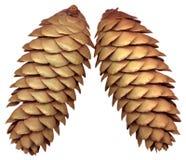 Fir cones Stock Photos