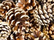 Fir Cones. Close-up view of fir cones Stock Photo