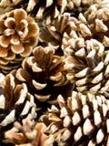 Fir Cones. Close-up view of fir cones Royalty Free Stock Photos