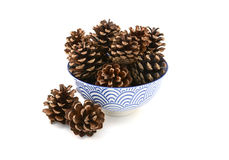 Fir cones arranged in and around a blue and white bowl Stock Images