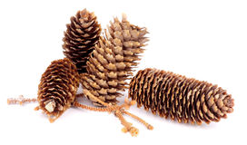 Fir Cones Stock Images