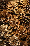 Fir cones background texture. Stock Photo