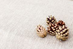 Fir cones on a beige background.  Stock Image