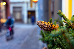 Fir cones and branches of spruce Christmas decorations in the ci Royalty Free Stock Photography