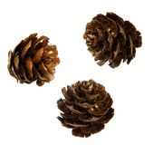 Fir cones with gold dust. Fir cones sprinkled with gold dust as New Year and Christmas decoration Stock Photography