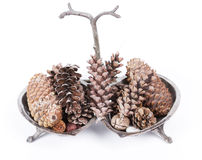 Fir cones and nuts arrangement Stock Photo