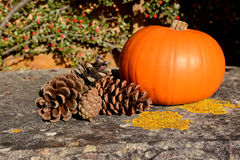 Fir cones and ripe pumpkin in warm sunlight Royalty Free Stock Photos