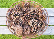 Fir Cones Stock Image