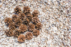 Fir cones on shells. Bumps on seashells on the beach Stock Photos