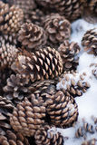 Fir cones in the snow. Christmas decoration shop fir cones Royalty Free Stock Photo