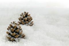 Fir Cones in a Snow Scene Stock Photos