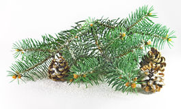 Fir and cones Stock Image