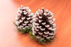 Fir cones Royalty Free Stock Photos
