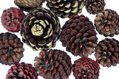 Fir Cones Stock Image