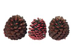 Fir Cones Royalty Free Stock Photos