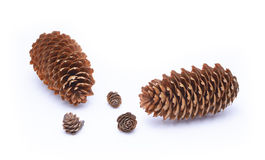 Fir cones Stock Photography