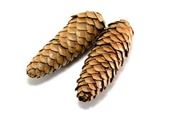 Fir cones Royalty Free Stock Photography