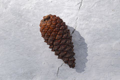 Fir cones on a white concrete Stock Image