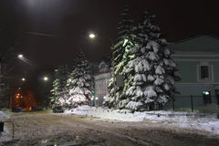 Fir covered with snow, on the night street town Ulyanovsk (Russia) Royalty Free Stock Photo