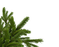 Fir decoration Stock Photography