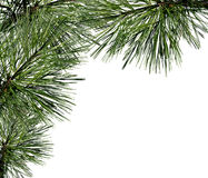 Fir decoration Stock Image