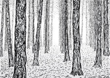 Fir forest. Schematic illustration of a forest Stock Images