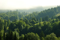 Fir forest into the clouds Stock Photos