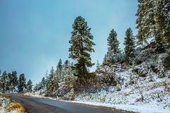 Fir forest in the Dolomites Stock Image
