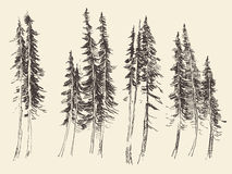 Fir forest engraving vector hand drawn sketch Stock Photography