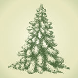 Fir in forest glade. Vector sketch Stock Photos