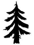 Fir, forest motive Stock Image