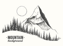 Fir forest mountain drawn vector illustration. Fir forest background with contours of the mountains hand drawn vector illustration Royalty Free Stock Photography