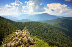 Fir forest in mountain Stock Images