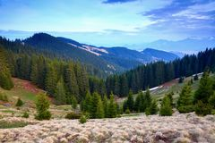 Fir forest stretches through the hills under the blue sky. Stock Images