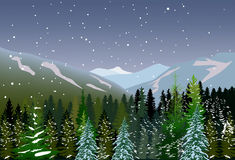 Fir fosest under snow in mountains Royalty Free Stock Image