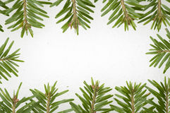 Fir frame on snow background Royalty Free Stock Photos