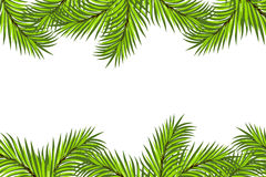 Fir framing. Isolated on white background Stock Photo